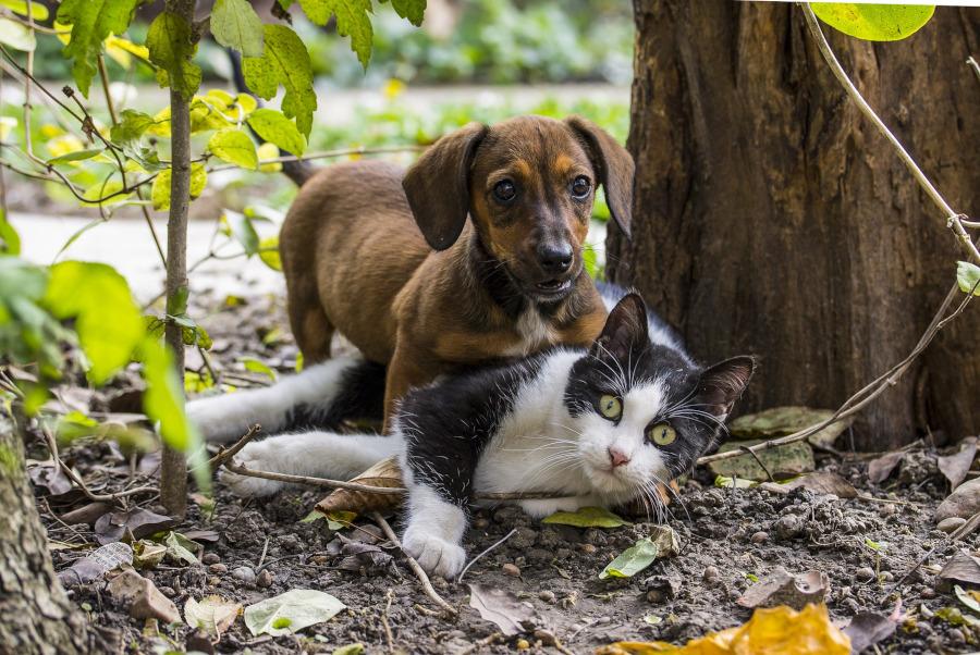 prietenia caine pisica
