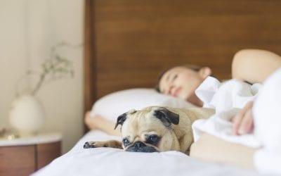 Insomnia la catei – Cum se trateaza?