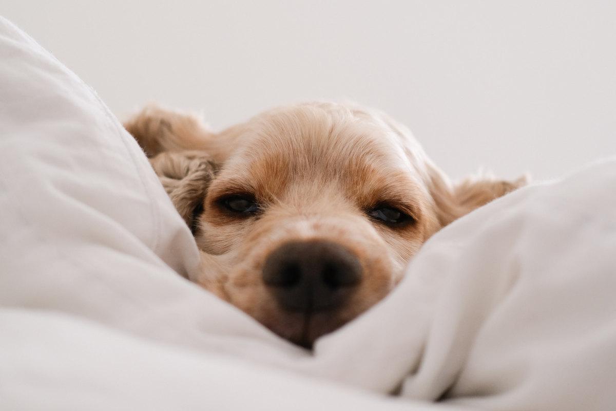 tratarea insomniei la catei